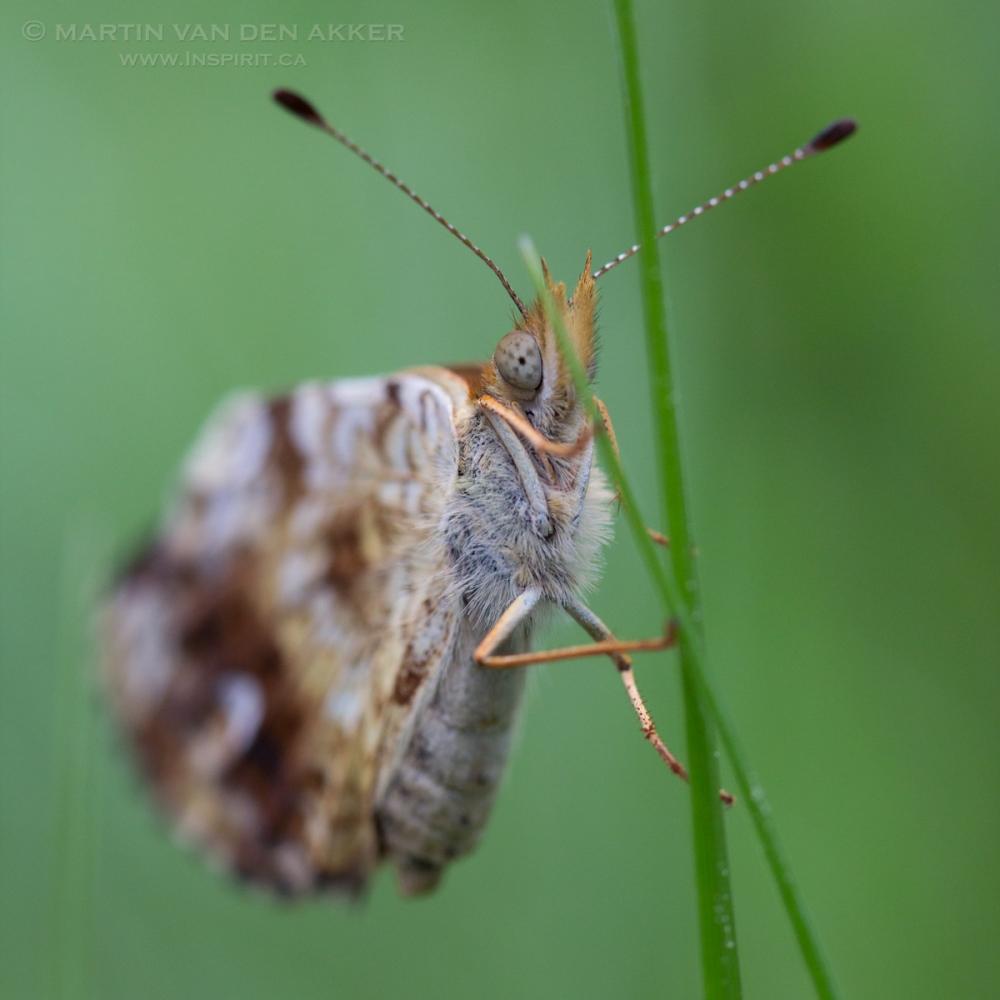 butterfly-closeup-logo