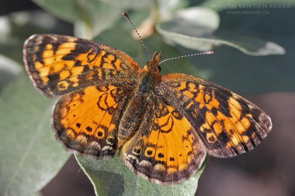 butterfly-x