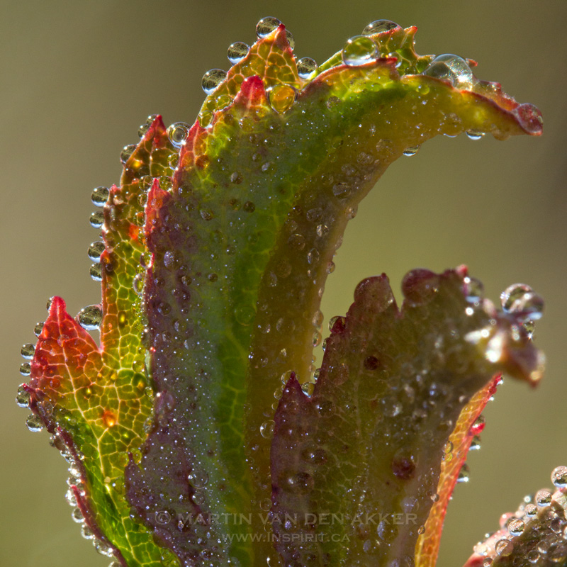 dew-drops-fall-leaf-square-