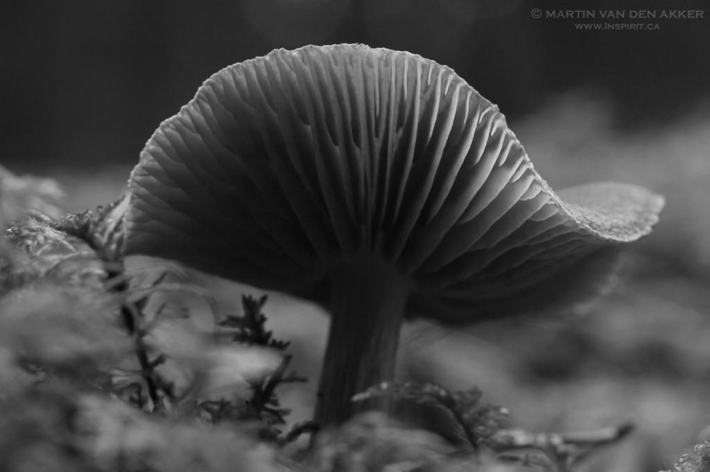 mushroom-BW3