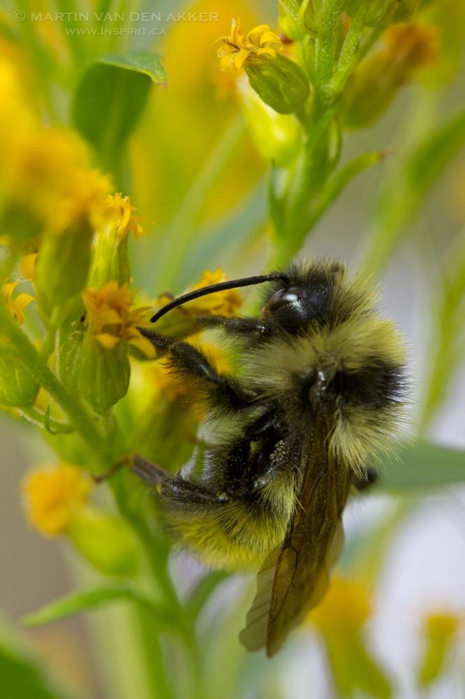 bumblebee-yellow-flower-log