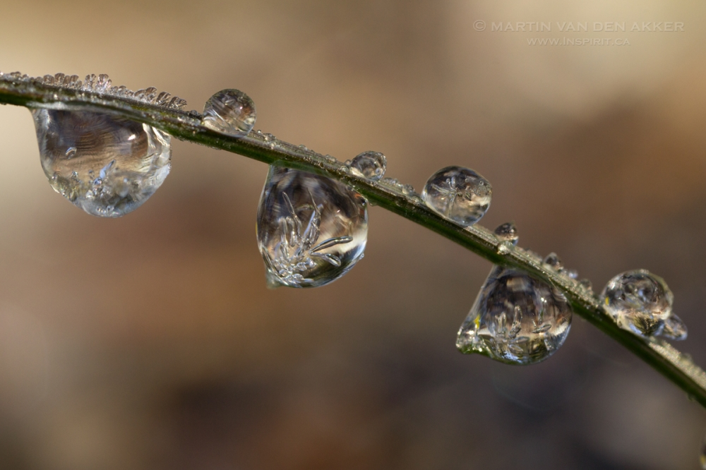 frozen-drops-grass-logo