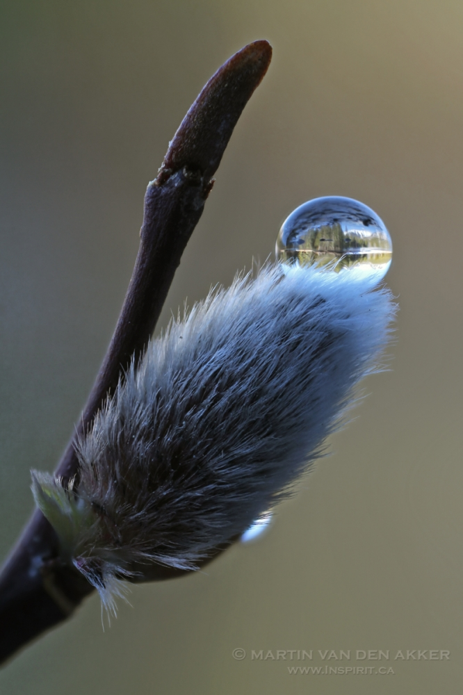 sphere-on-pussy-willow-logo