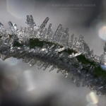 icecrystals-on-grass-logo